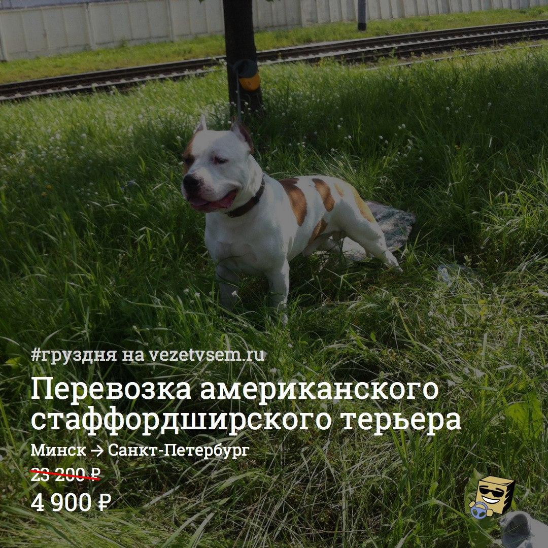 международная перевозка животных в санкт-петербург