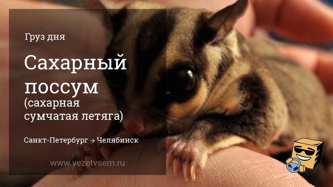 попутные грузоперевозки по россии животное