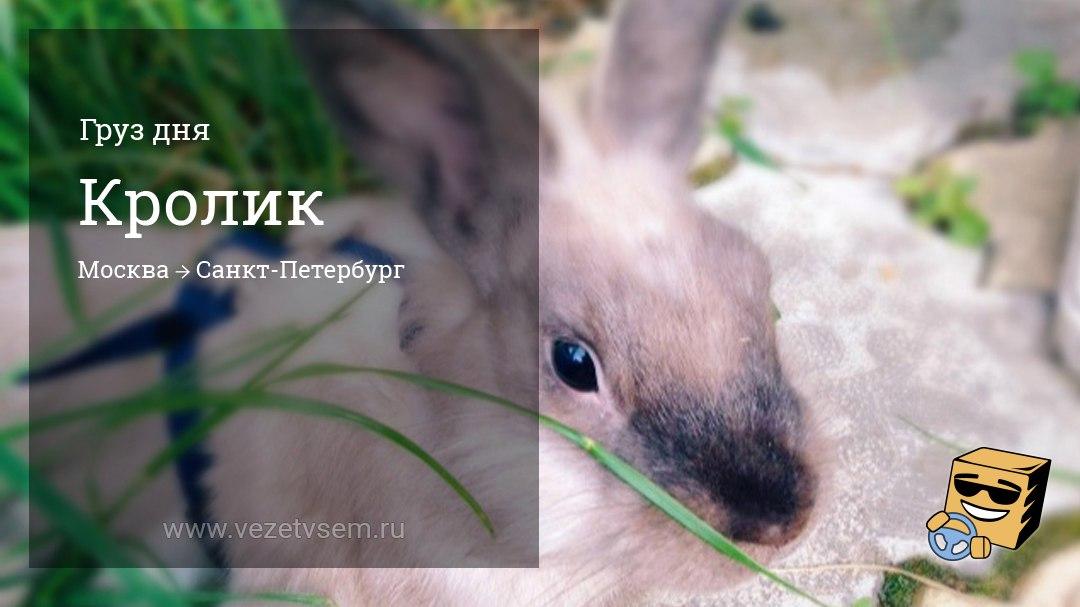 перевозка любых грузов по россии кролик