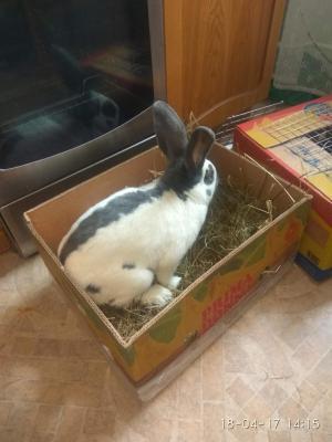 Сколько стоит доставка средних 3 коробок С кроликами недорого из Орла в Симферополя