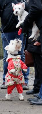 Транспортировка собаки  автотранспортом из Дедовска в Санкт-Петербург