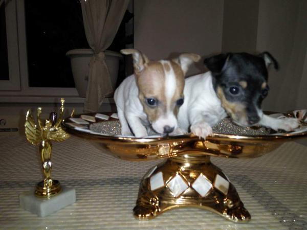 Услуги по доставке щенка из Краснодара в Абакан