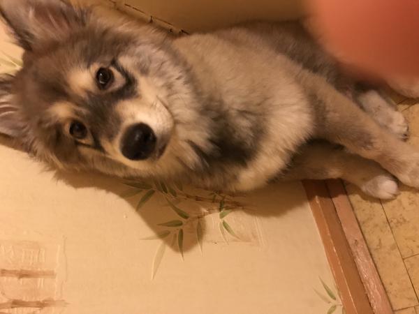 Услуга по транспортировке собаки  В клетке из Норильска в Красноярск