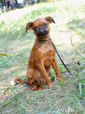 Перевозка собак из Белгорода в Тулу