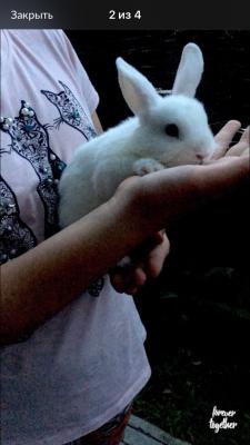 Транспортировать маленького кролика дешево из Волжского в Санкт-Петербург