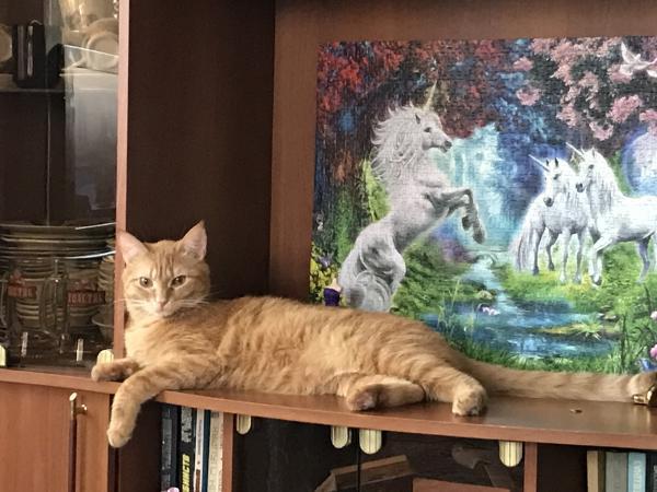 Доставка кота В переноске дешево из Энгельса в Санкт-Петербург