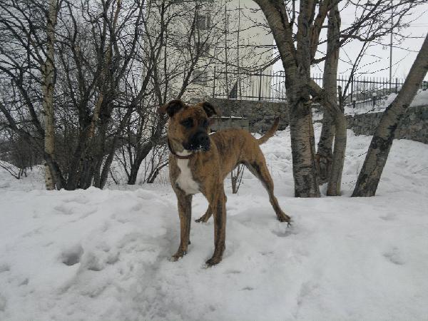Транспортировка собак из Мурманска в Димитровграда