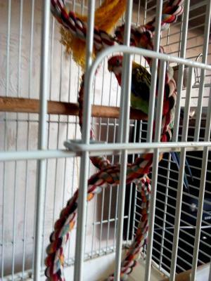 Сколько стоит транспортировка клетки С попугаем недорого из Кирова в Москву