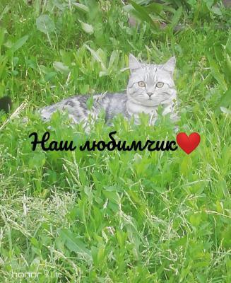 Перевезти кота дешево из Омска в Зеленоград