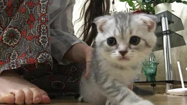 Транспортировать котенка из Махачкалы в Москву