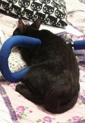 Перевезти котенка дешево из Санкт-Петербурга в Туймазы