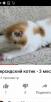 Перевезти котенка В переноске недорого из Новосибирска в Южно-Сахалинск