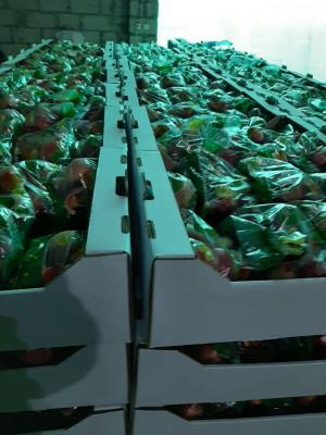 Перевозка яблока по Нальчику