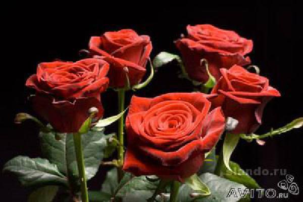 Перевезти колумбийские розы из Самары в Балаково