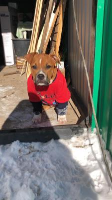 Сколько стоит доставка собаки  недорого из Вятских Полян в Водный