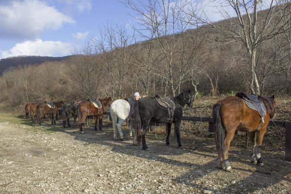 Транспортировка лошади недорого из Тенгинки в Молькино