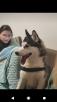 Сколько стоит перевозка собаки  недорого из Москвы в Санкт-Петербург
