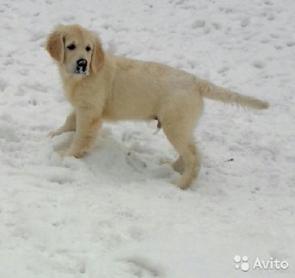 Транспортировка собак недорого из Хабаровска в Магадан