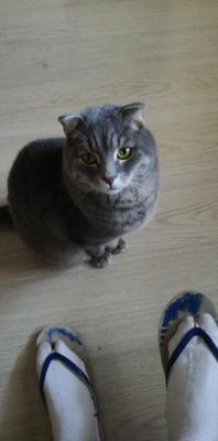 Транспортировать кота В переноске из Тамбова в Белгород