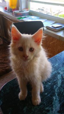 Перевозка котенка В переноске из Можайска в Челябинск