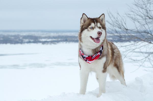 Транспортировать собаку  и люди из Нижний Новгород в Санкт-Петербург