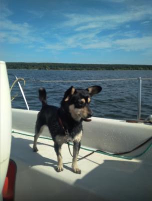 Сколько стоит отвезти собаку  В клетке недорого из Бердска в Санкт-Петербург