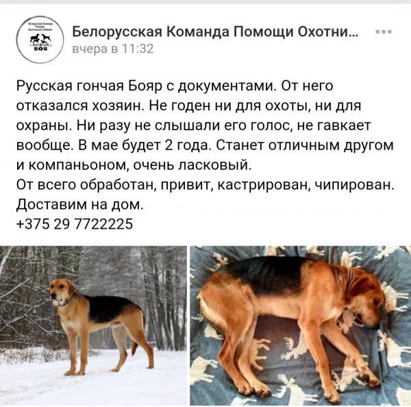 Отвезти собаку  из Белоруссия, Минска в Россия, Калининград