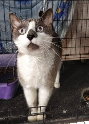 Доставка котенка дешево из Хабаровска в Калининград