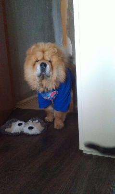 Доставить собак недорого из Томска в Ангарска