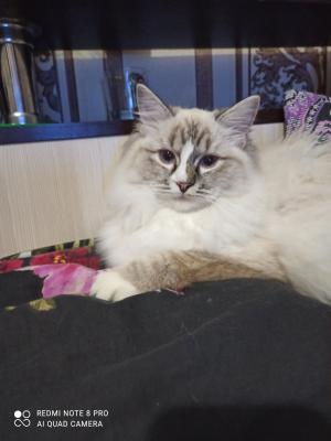 Транспортировать кошку недорого из Симферополя в Ростов-на-Дону