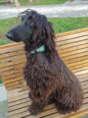 Доставить собаку  автотранспортом из Севастополя в Осельки