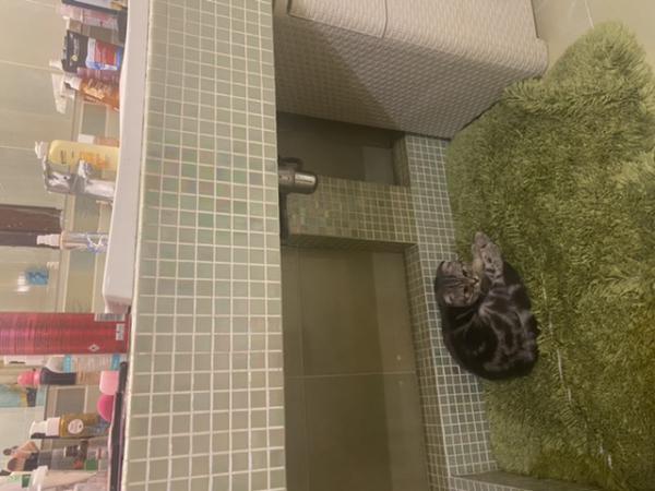 Перевезти кошку недорого из Санкт-Петербурга в Адлер