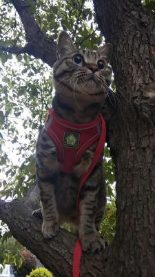 Доставка кота недорого из Химок в Ставрополь