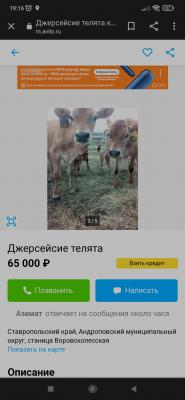 Доставить теленок недорого из  в Киргизия, Бишкек