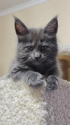 Перевезти котенка из Магнитогорска в Челябинск