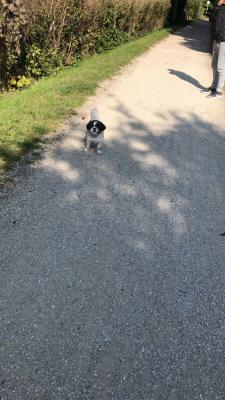 Отвезти собаку  В клетке дешево из Швейцария, Le Grand-Saconnex в Россия, Омск