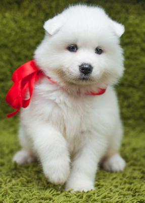 Доставка собак дешево из Новомосковска в Сургут