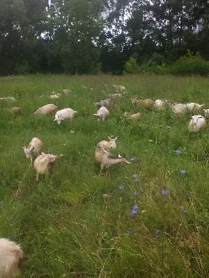 Транспортировать другие животные дешево из Казани в Омск