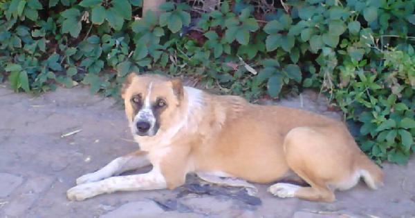 Сколько стоит отвезти собаку недорого из Астрахани в Тульскую обл. поселок Заокский