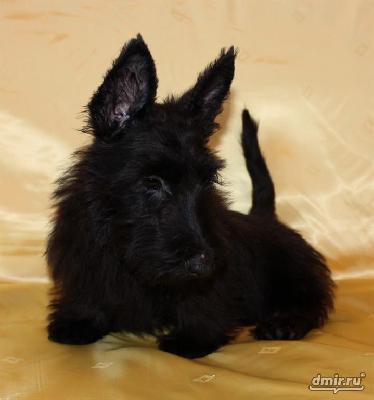 Перевезти щенка из Омск в Томск