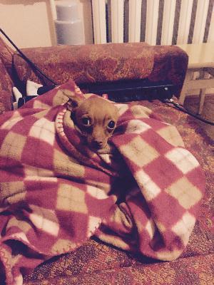 Сколько стоит доставить собак недорого из Северодвинск в Снежногорск