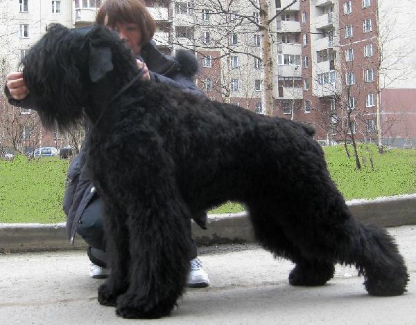 Доставить собак недорого из Ломоносовский район в Санкт-Петербург