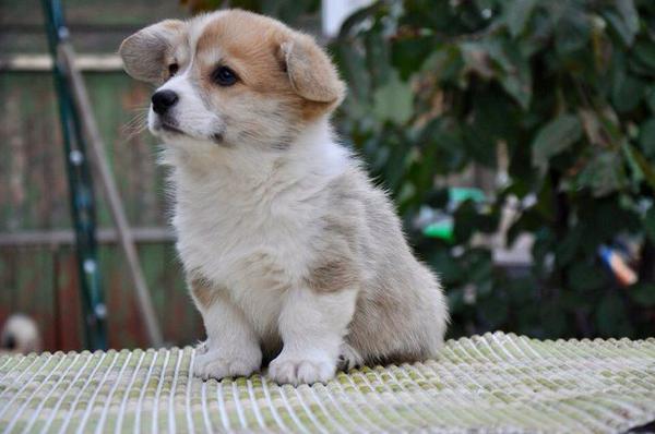 Сколько стоит отвезти собак недорого из Москва в Мурманск
