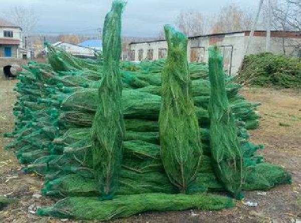 Перевезти новогодние елки (деревья) дешево из Неверкино в Орск