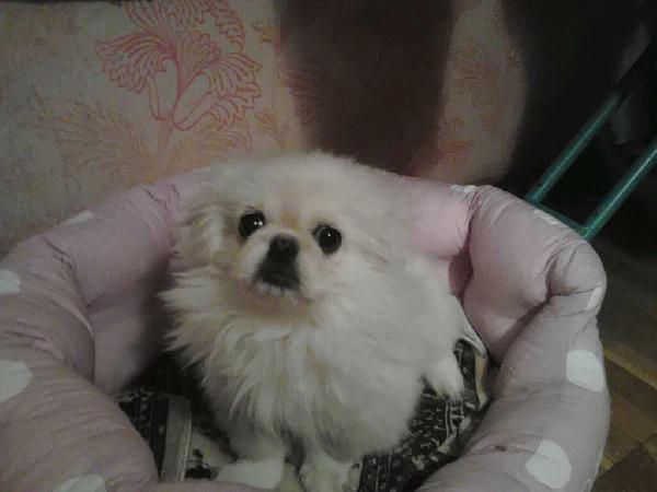 Доставить собак недорого из Санкт-Петербург в Сочи