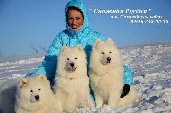 Услуги по доставке собак  из Воркуты в Москву
