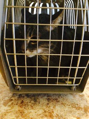 Транспортировать один симпатичный кота. недорого из Уфа в Москва