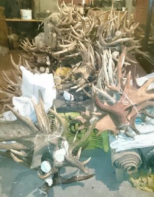 Сколько стоит автодоставка рогов лося из Череповец в Северодвинск