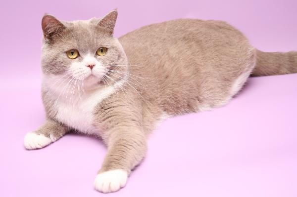 Доставка кошки дешево из Оренбург в Москва
