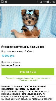 Транспортировка собак из Москва в Сургут
